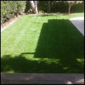 artificial grass installers